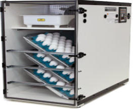 Gqf company incubators and brooders for eggs hatching